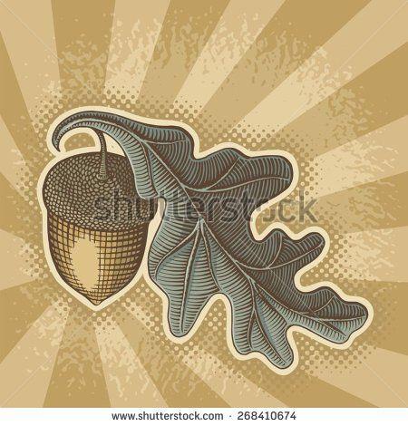 Acorn Stock Vectors & Vector Clip Art | Shutterstock