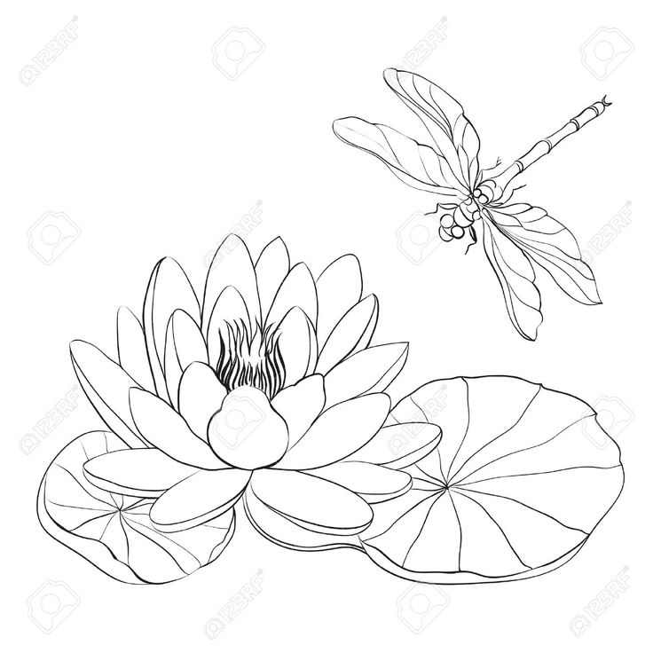 Water Lily Stencil Black And White: 18 Best Images About Vector On Pinterest