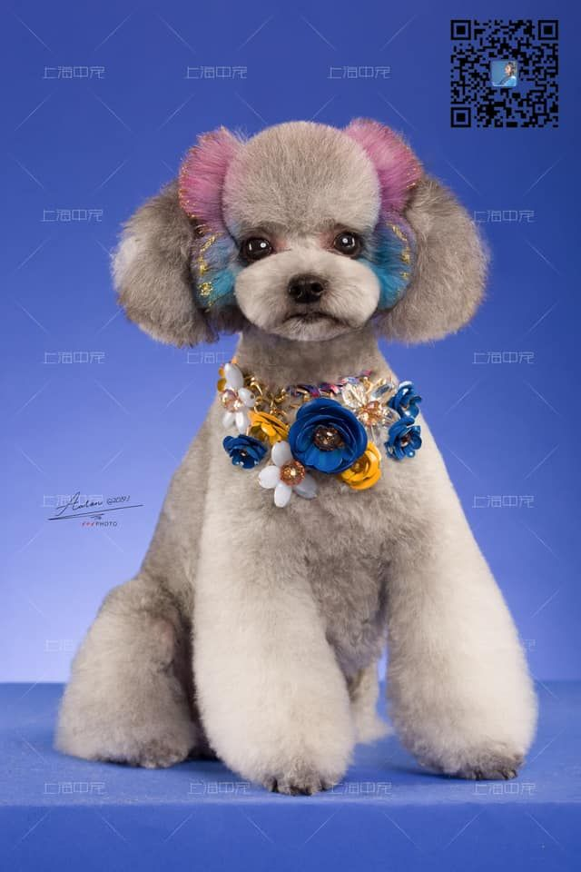 Amazing Opawz Styling Annie Created This Design With Pet Hair Chalk And Glitter Gel It Adheres Very Well To Dog S Hair Wi Dog Grooming Pet Collars Luxury Pet