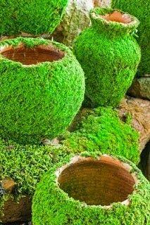 Moos Blumentopf= Handvoll Moos + 1 Becher Buttermilch +1 Becher Wasser im Mixer zerkleinern und die cremige Flussigkeit mit einem Pinsel auf Blummentöpfe malen. Ab und zu mit Wasser besprühen