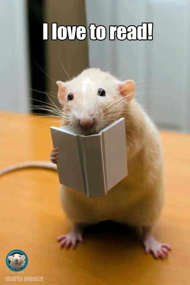 Reading rat