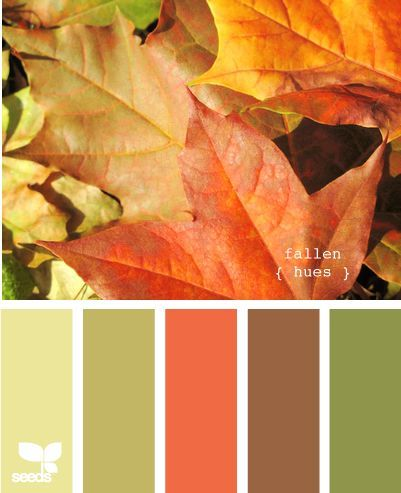 fallen hues - This might work for the den. The light yellowish color for the walls, The furniture redone in the brown tones with green throw pillows.: