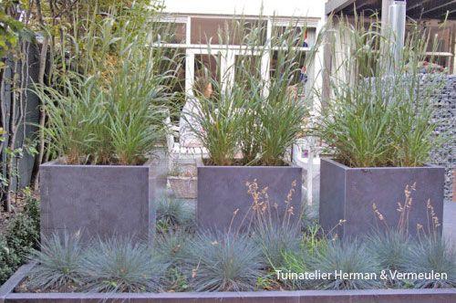 Tussen de terrassen zijn stenen bloembakken geplaatst met vedergras of diamantgras (Stipa calamagrostis). De bloempluimen bewegen mooi op de wind zodat er ook vanuit het huis een mooi uitzicht is. Aan de voet van de bakken staat het blauwe schape- of zwenkgras (Festuca glauca). De grassen zijn sterk, kunnen tegen droogte en vragen bijna geen onderhoud.