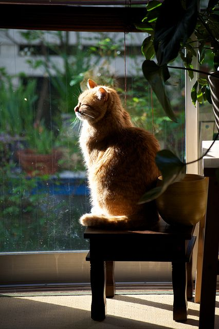 """""""If you, like me, were made of fur, and the sun warmed you, like me, you'd purr."""" --Louis Wain"""
