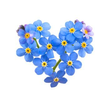 flower language blue forget me