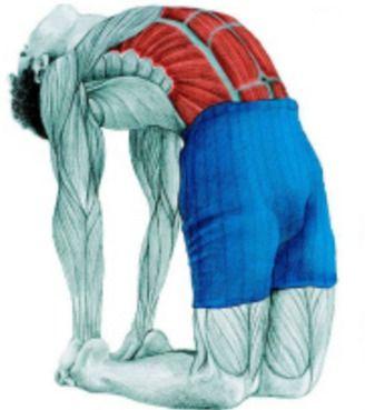 10 упражнений на растяжку: как тянутся мышцы спины и живота на самом деле. Часть 3