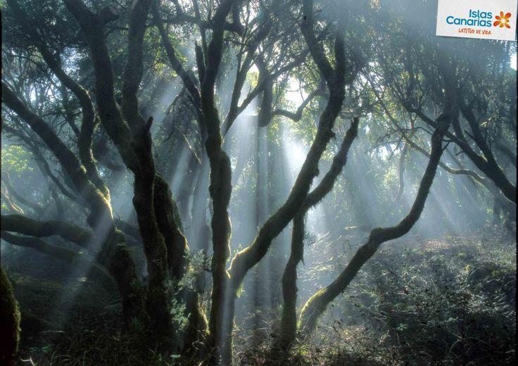Así reclama el Sendero de la LLanía la luz que necesita. ¿Quién se apunta a un paseo por El Hierro? ¡Buenos días!