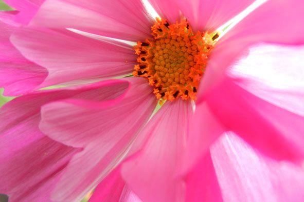 Garden flowers - Extreme closeup - 810