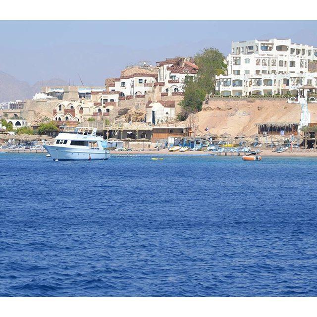【mahi_guide】さんのInstagramをピンしています。 《#sharmelsheikh #Gopro #actioncamera #actioncam #diving #snorkeling #scubadiving #海 #夏 #シャルムエルシェイク #marines #sports #travel #vacation #sea #Egypt #ゴープロ #カメラ #撮影 #水中撮影 #ダイビング #シュノーケリング #スキューバダイビング #スキューバ #海外 #旅行 #旅 #camera #photography #yolo》