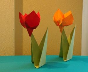 tulipano (il fiore)