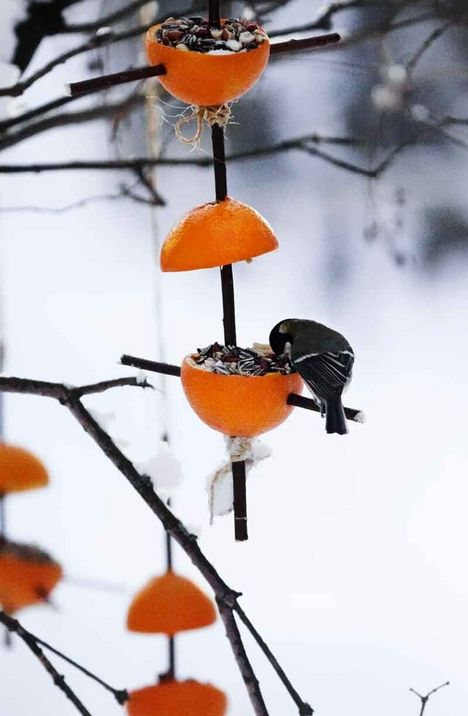 Making a bird feeder of oranges (instructions in Finnish)