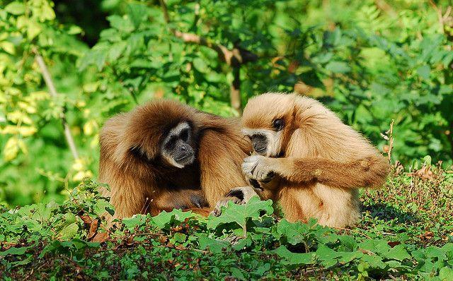 Det er svært ikke at finde de store ord frem efter at have besøgt Sabah. Her er smukke strande, krystalklart vand med farvestralende koraller og fisk. Eksotiske øer, kæmpe grotter og majestætiske bjerge.  Her lever de berømte orangutanger, løveaber, gibbonaber, vildsvin og rådyr. Alt sammen krydret med charme, en venlige lokalbefolkning og atmosfære nok til at overvælde selv den mest erfarne rejsende.