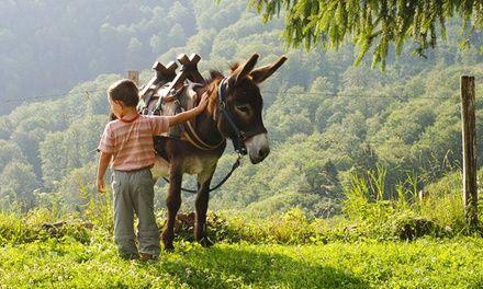 BEAU NEZ D'ANE à Gigean : Balade à dos d'âne pour enfant: #GIGEAN 19.90€ au lieu de 45.00€ (56% de réduction)