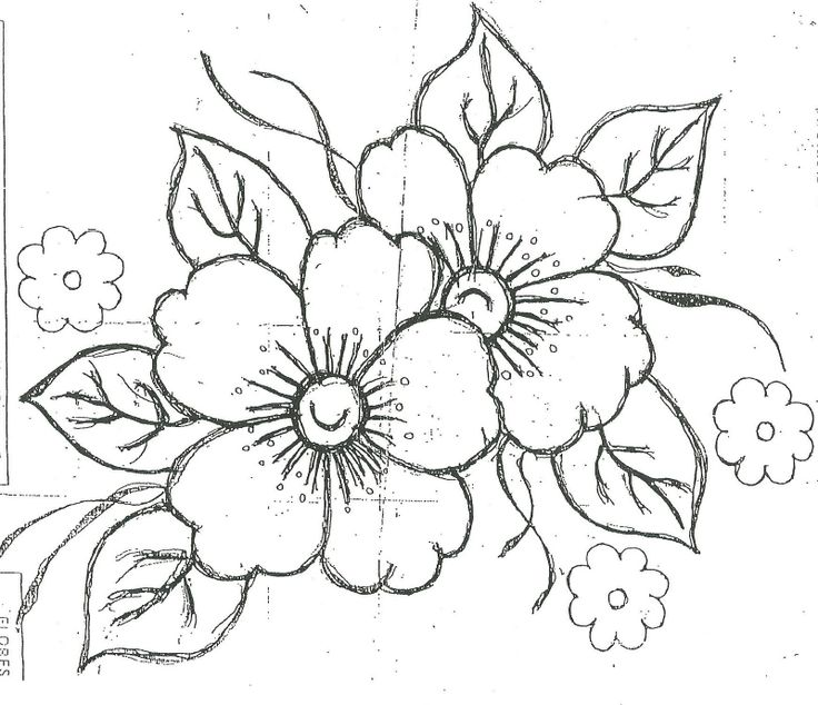 Marigold Flower Coloring Page Sketch Coloring Page