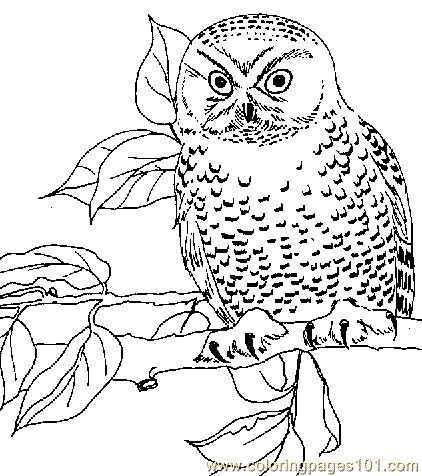 360 best Owl sketches images on Pinterest Owl tattoos Tattoo