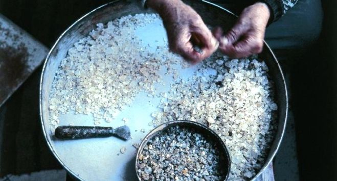 Mastiha: A very special ingredient