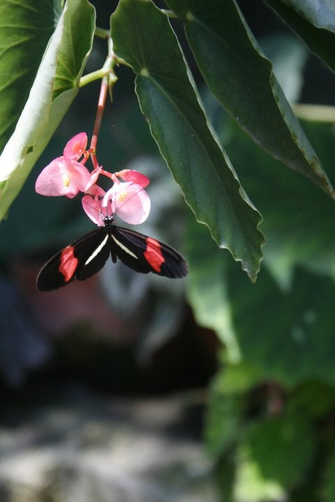 Butterfly sanctuary in Copan Ruinas, Honduras