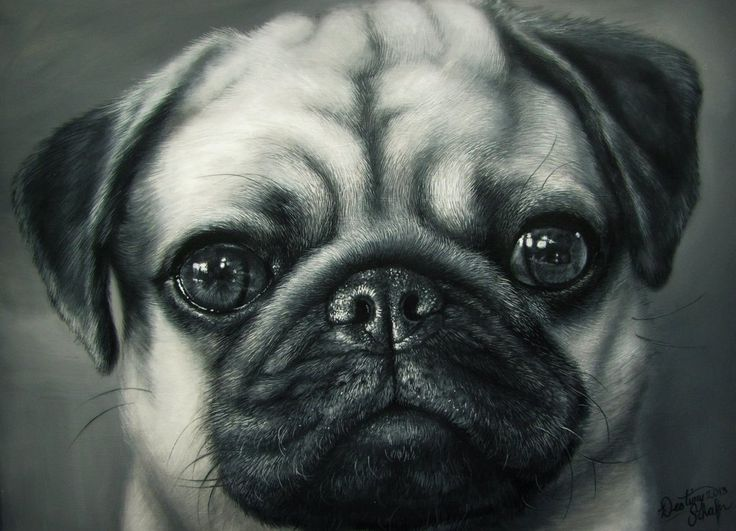 pug painting by gimmegammi medium acrylic paint on canvas size 20x18