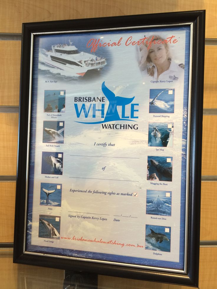 Brisbane Whale Watching Official Certificate of Participation and sighting of different whale types as a souvenir of your amazing whale watching experience. You tick which whales you've seen and Captain Kerry will vertify your sightings at the end of the day. #brisbanewhalewatching #whalemerch #australiansouvenir #whalemerchandise #whalewatching #australia