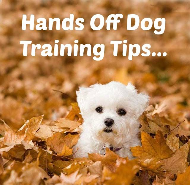 how to potty train a maltese puppy