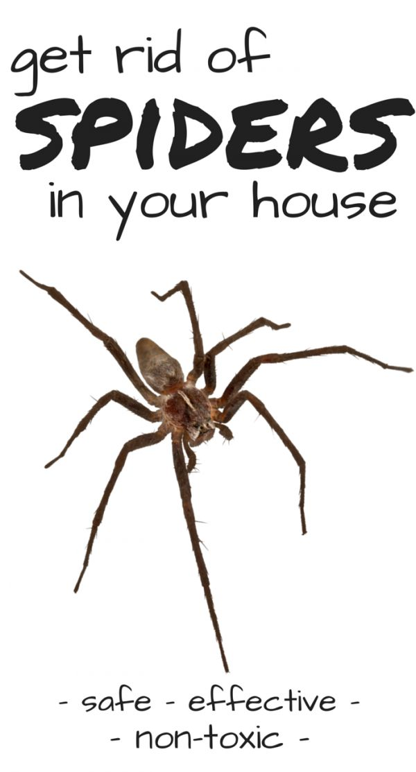 Natural ways to get rid of spiders (especially brown recluse spiders)!  Great info!  Includes a multi-faceted approach towards getting rid of spiders and not just a spray.