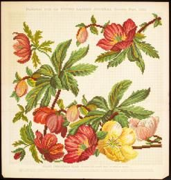 89/1389-93 Needlework pattern, paper, England, 1860-1900. Giant Christmas rose design for chair seat - Powerhouse Museum Collection