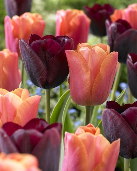 Spring Flowers And Yard Landscaping Ideas 20 Tulip Bed: 54 Best Chartreuse Images On Pinterest