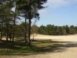 Stuifzandgebied Loonse en Drunense duinen