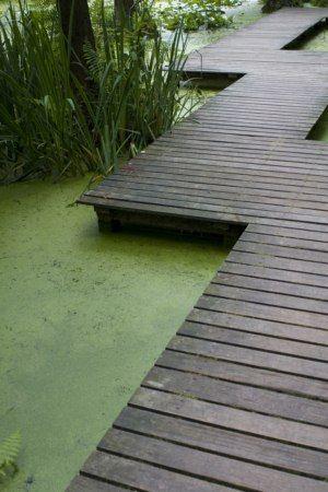 51 best promenade en sous bois images on pinterest garden paths pathways and architecture - Allee de jardin facile ...