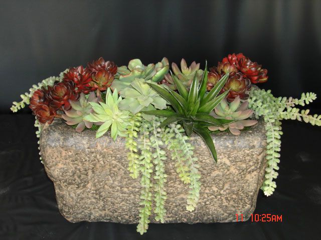 Succulent Plant Arrangements Containers And Preserved