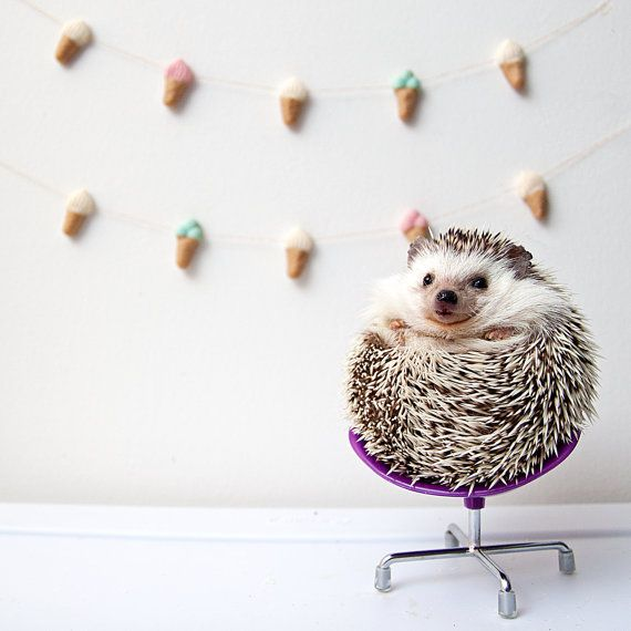 Cute Real Hedgehog Photo / Photography Wall by ...