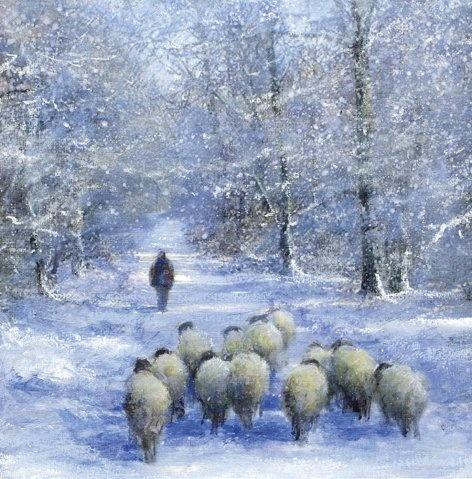 Sheep and Shepherd:    shepherd sheep in snow