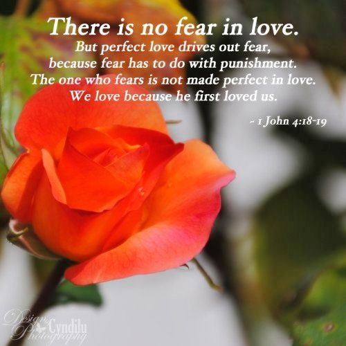 Roses speak of such life and vibrancy - may your day be filled with so much love that all fear is driven out!
