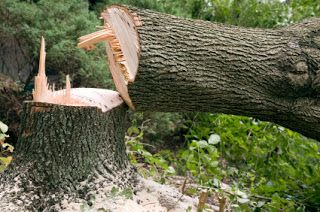 Commercial And Emergency Tree services : Tree removal cost ??