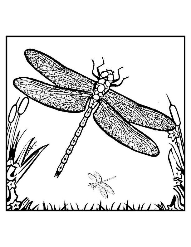 17 images about naaldekoker on pinterest glitter glue for Dragonfly coloring book pages