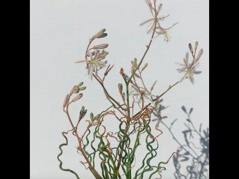 Trachyandra jacquinii seen in habitat