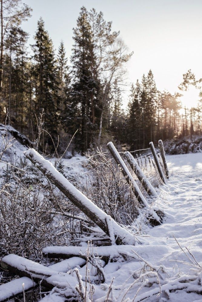 Korin Susanne: goodbye winter