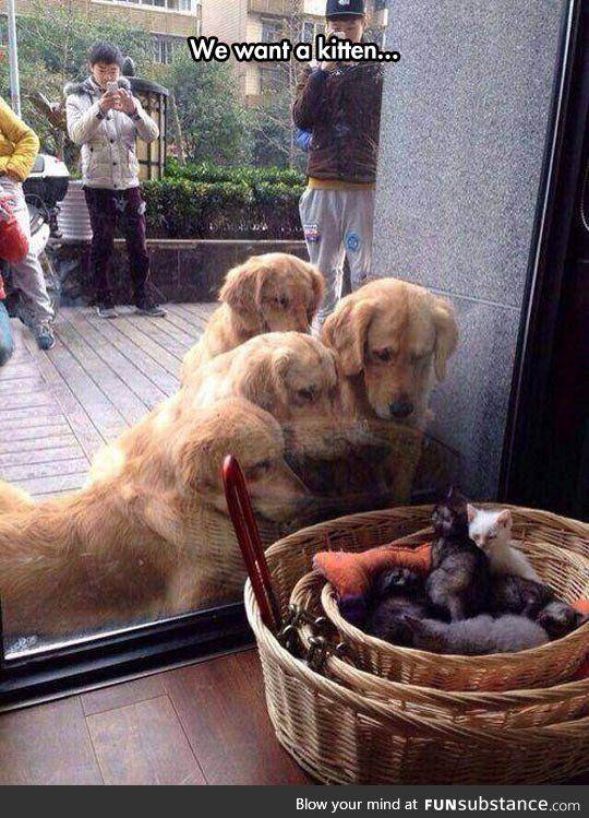 Kitten lovers