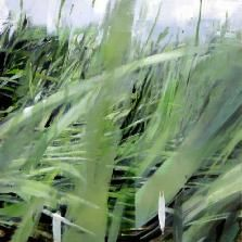 "Alex Kanevsky, Landscape with grass 2, 22 x 22"" oil on mylar mounted on wood"