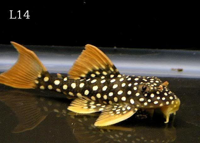 Pin Auf Aquarium Fish More