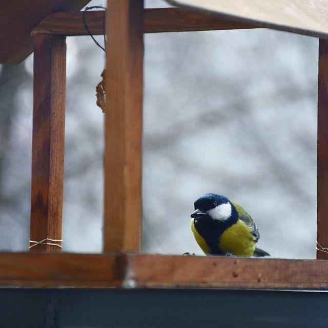 Przepraszam czy ma pan chwilę żeby porozmawiać o dokarmianiu ptaków w zimę?