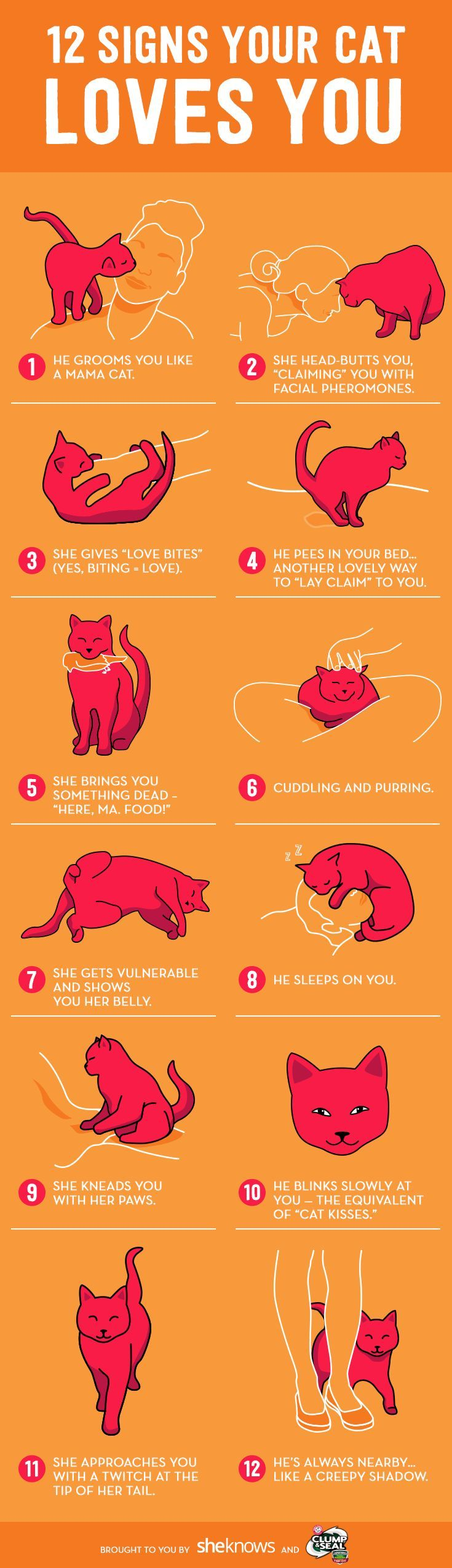 How to know your cat loves you, even if he claws the crap out of your hands – ♕ Tiere | Cats love ♕