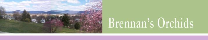 Brennan's Orchids & Gesneriads, Mt Jackson Virginia