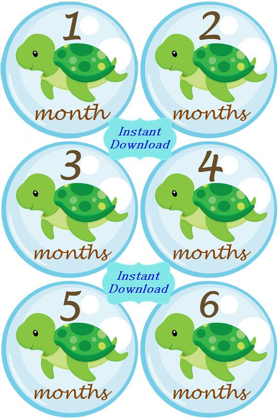 DIY Baby Sea Turtles Monthly Birthday by SnuggleBugBabyandMe, $5.25