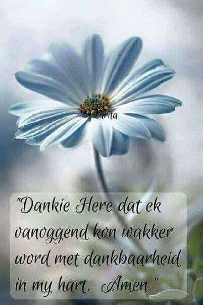 Dankie Heer
