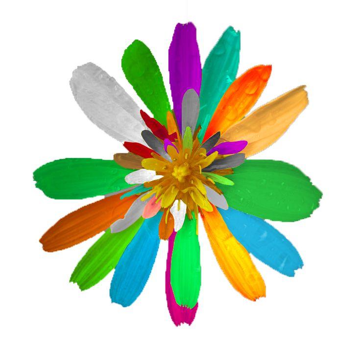 20 août ... Fleur massacrée par l'apprenti  ! Avant c'était une belle fleur jaune ...