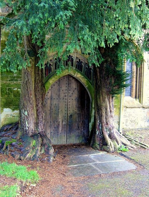 One can only marvel at this entry to what may be a secret garden...could it be that there really are gnomes? or trolls? or fairies? Did one of them abandon this lovely tree so we can share secrets here?