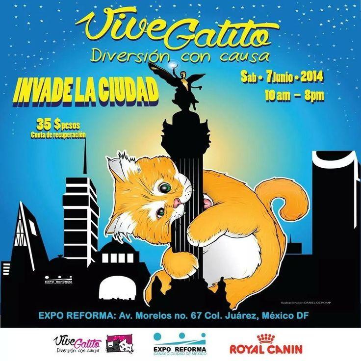 #vivegatito2014 Expo Reforma Ciudad de México sábado 7 de junio.