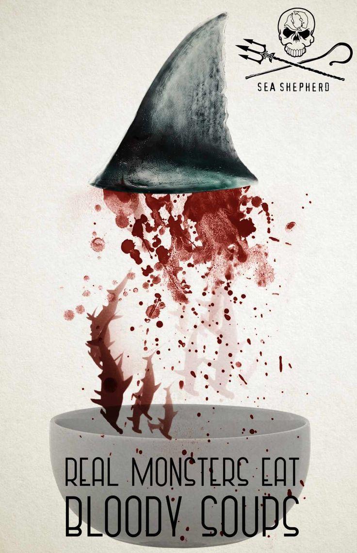 Sea Shepherd - Stop shark finning ! Non aux ailerons de requins !