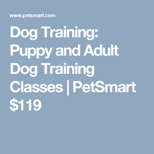 70879f6f3979949b86b1f13b87fc6324 petsmart harness teal color dog cart harness \u2022 wiring diagram  at edmiracle.co